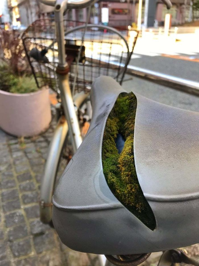 Colony Of Moss Growing Inside A Bike Seat