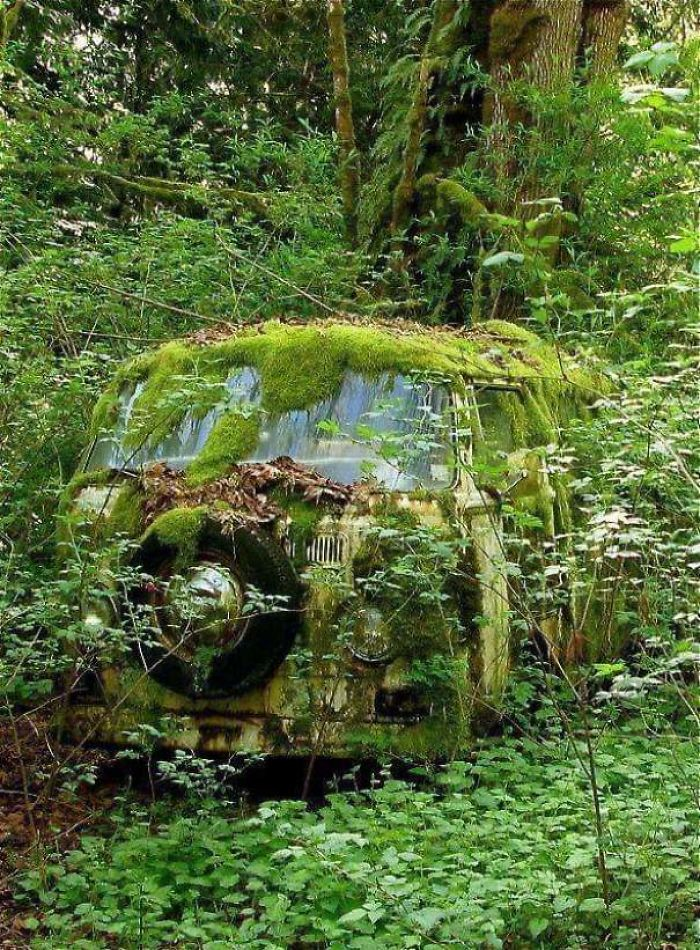 Just A Little Moss, It Will Buff Out