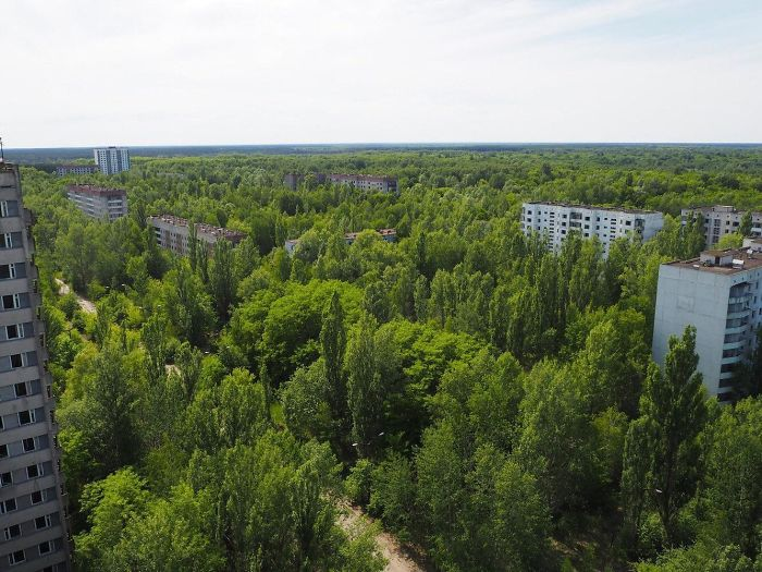 30 Years Later, Pripyat Has Turned Into A Sort Of Nature Reserve