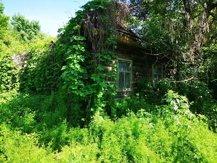 Overgrown House In Zalissya (Village Inside Chernobyl Exclusion Zone)