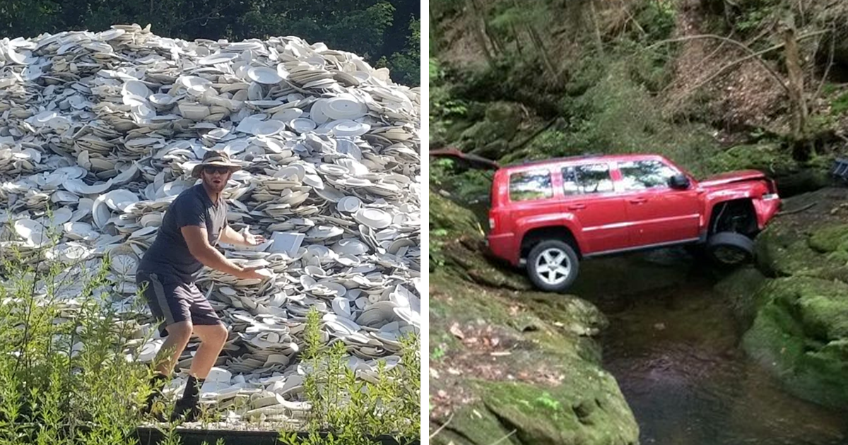 40 Times People Found Something Weird In The Woods And Just Had To Share