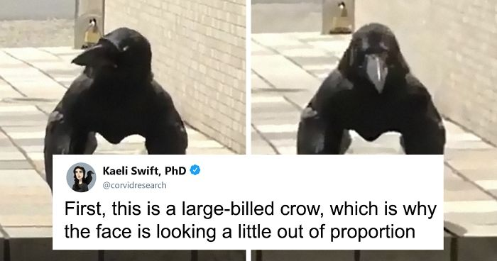 Unusually Standing Crow Gets Internet Hilariously Trying To Explain It, But A Bird Expert Tells It As It Is