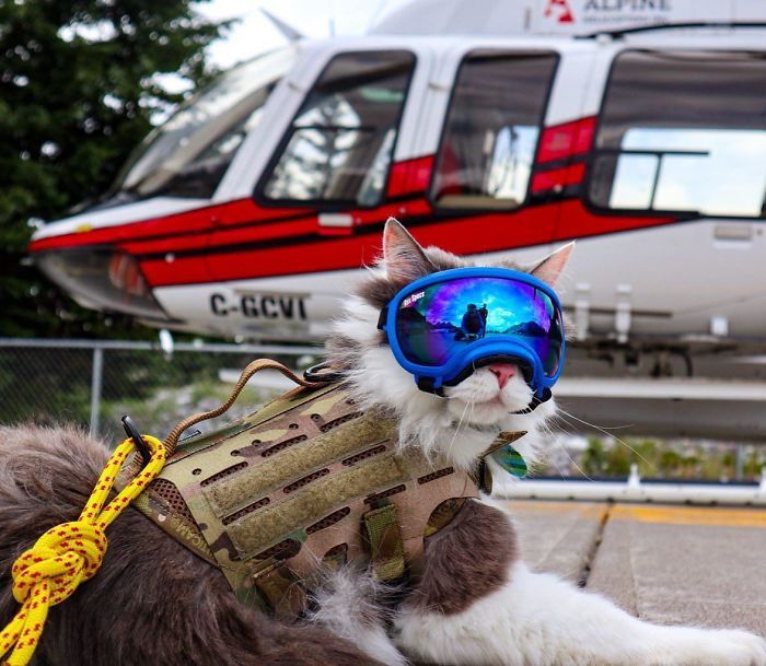 Meowtain Rescue, Standing By