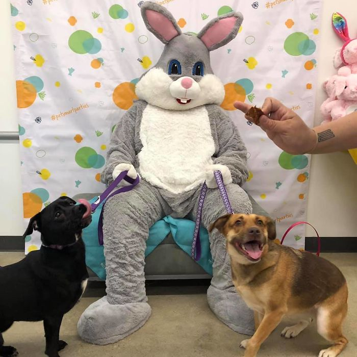 They Didn't Really Enjoy Seeing The Easter Bunny This Year. This Is The Best Pic We Could Get Of Them