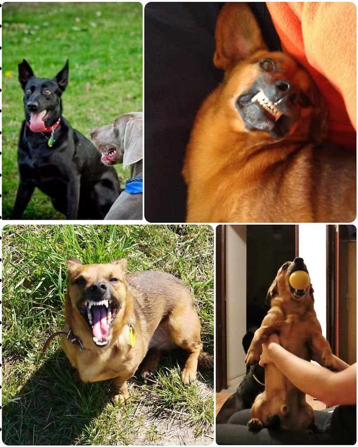 I Have So Many Of Unflattering Photos Of My Shelter Dogs, They Are Unique 🤩