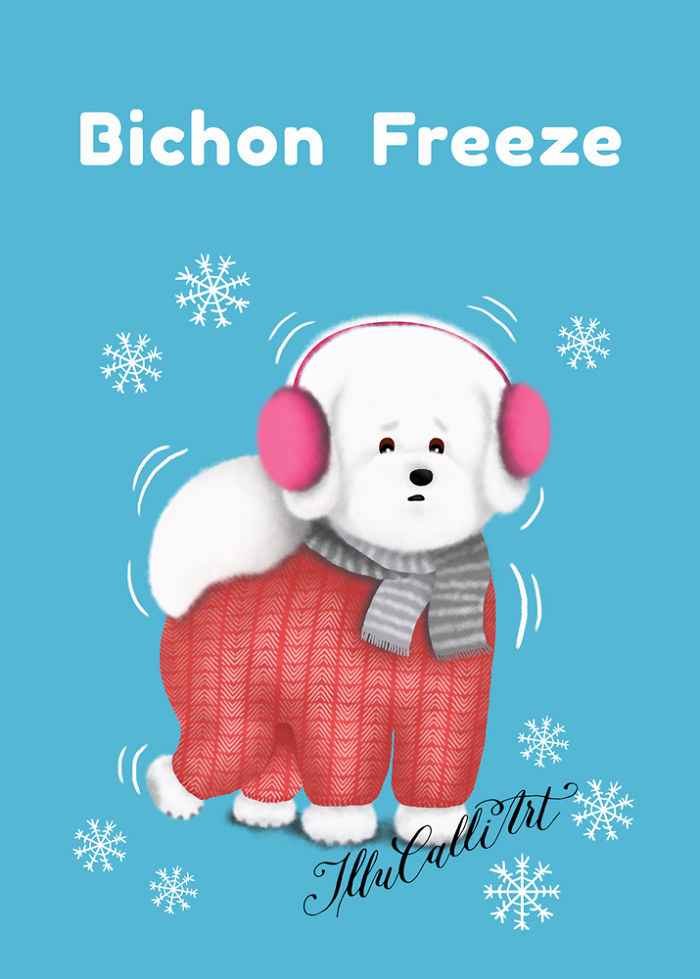 Bichon Freeze