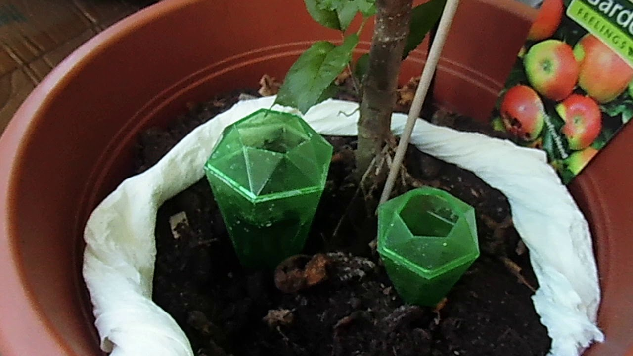 DIY Water Reserve For Your Plants