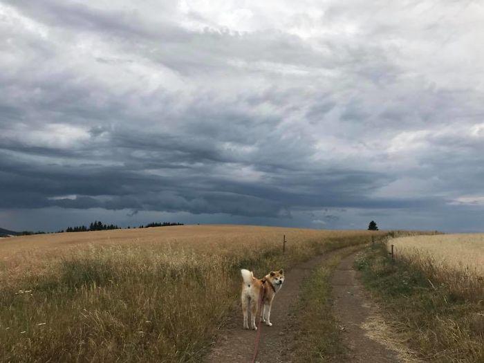 Hiking With An Akita Inu
