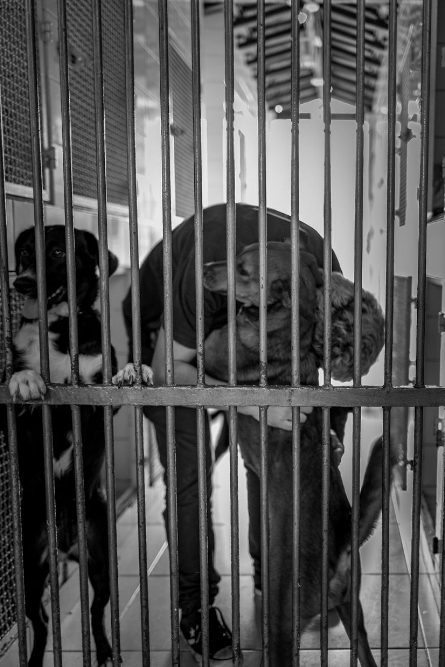 """My Photo Series """"Demystification Of Voluntary Work"""" Shows What Really Happens At An Animal Shelter"""