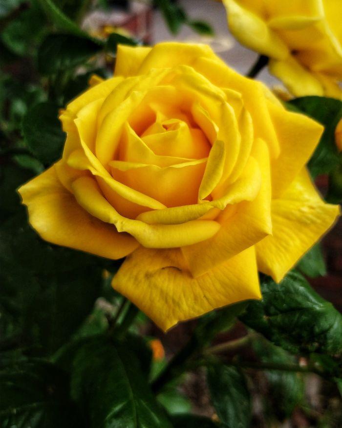 Sharing Beautiful Macro Flowers