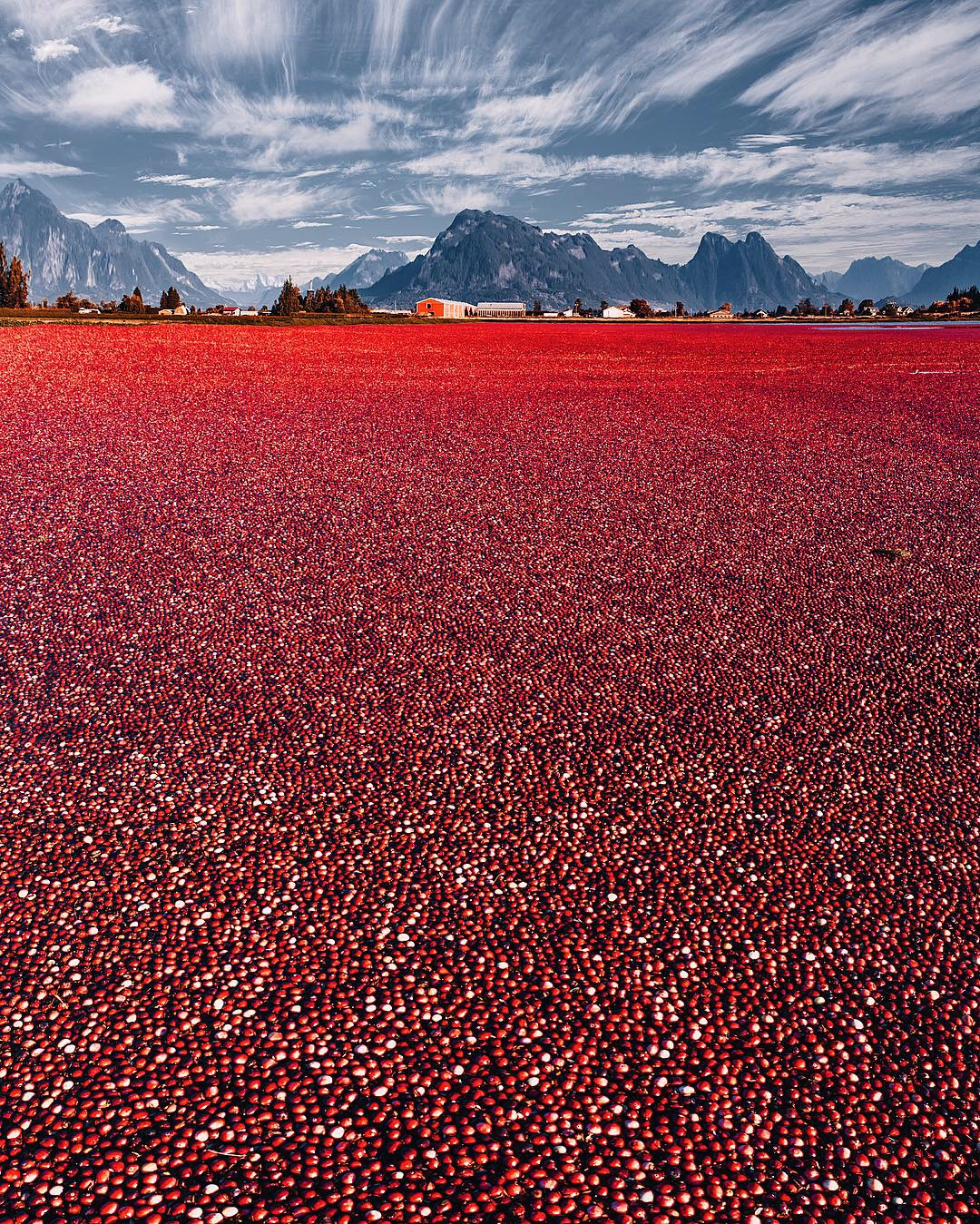 Strange Red Field Near Vancouver