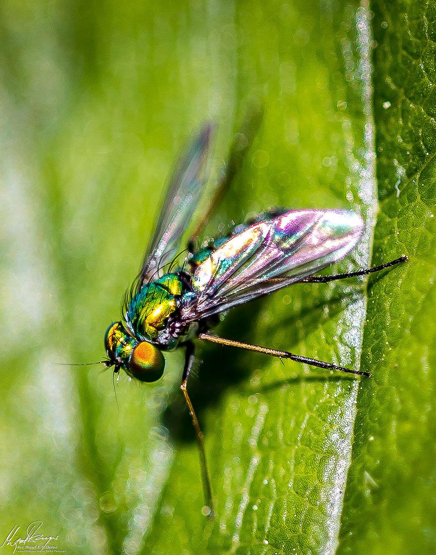Metallic Green Fly