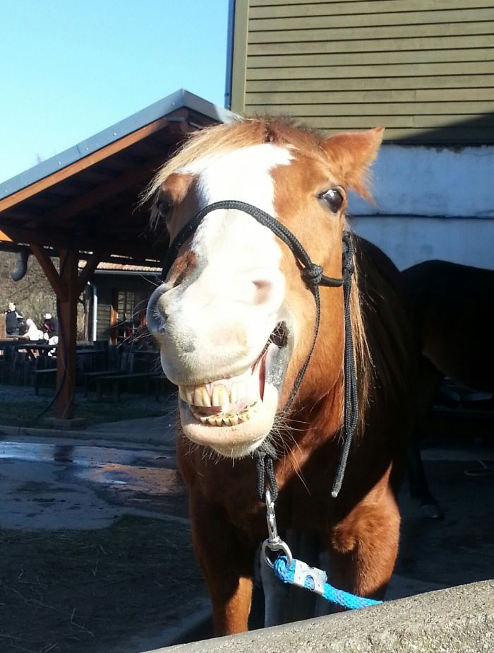 Sissi, The Smiling Horse😁