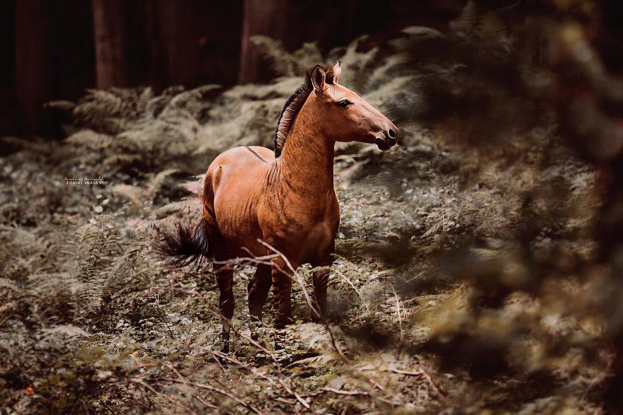 الحصان المُزرد