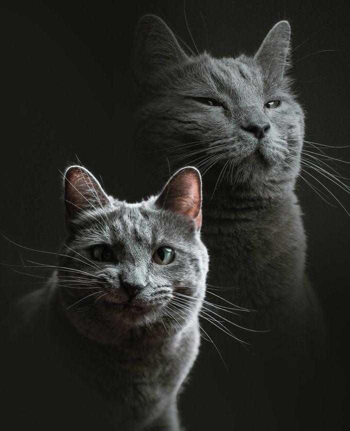 Esto es lo que ocurre cuando un fotógrafo te cuida al gato (10 imágenes)