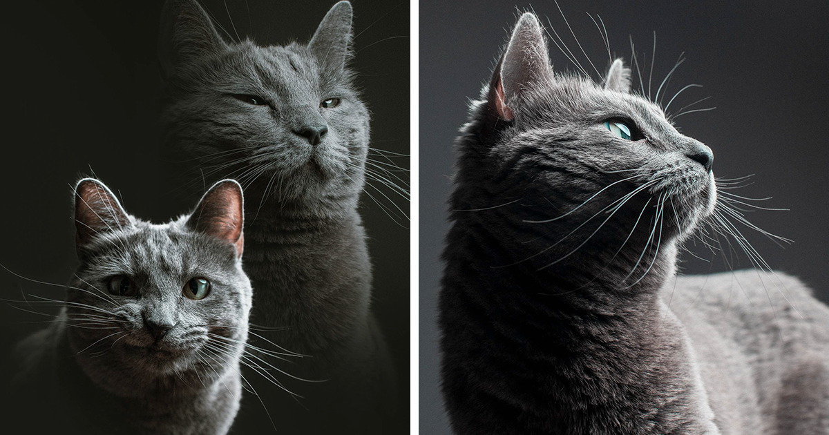 This Is What Happens When A Photographer Babysits Your Cat (11 Pics)