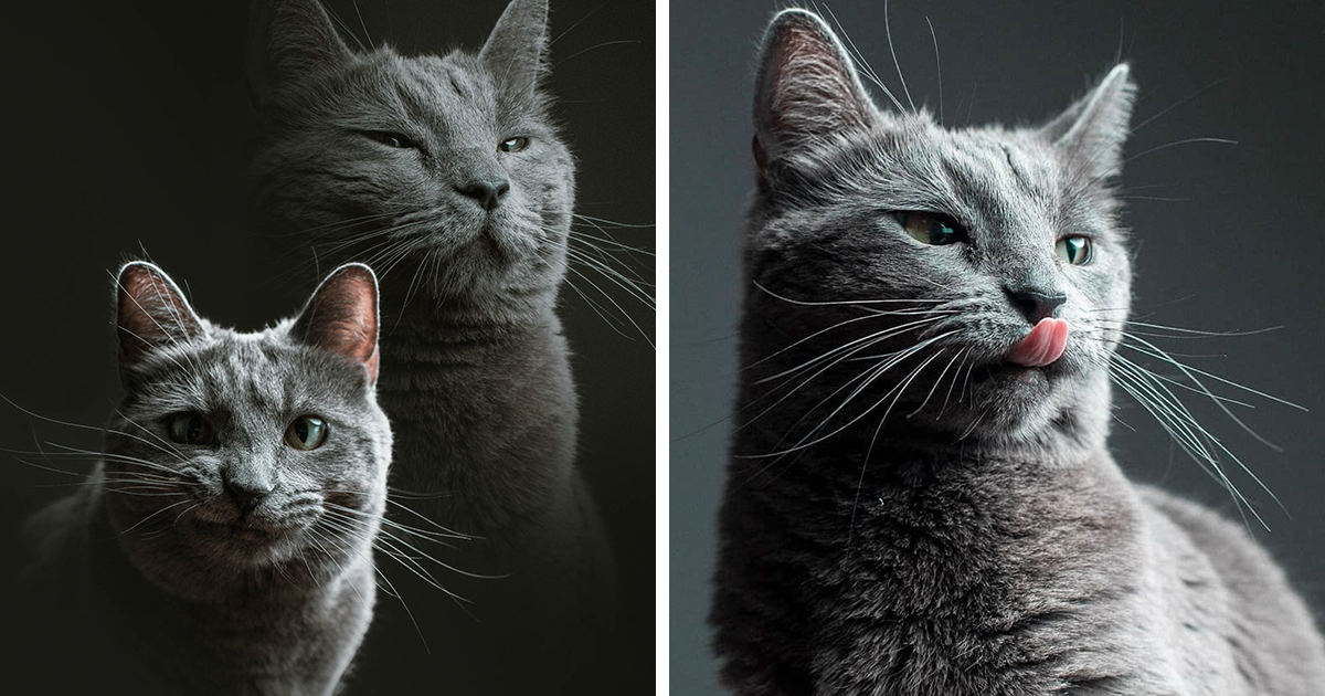 This Is What Happens When A Photographer Babysits Your Cat (10 Pics)