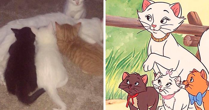 "This Cat Named Duchess Just Gave Birth To The Entire Cast Of ""Aristocats"""