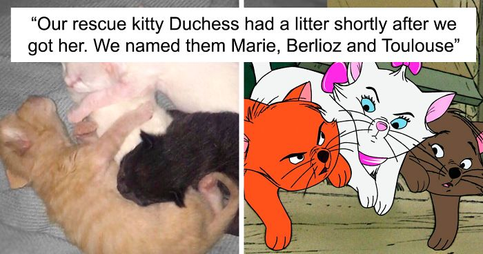 """Owners Named Their Cat Duchess And Then She Gave Birth To All Of """"The Aristocats"""" Cast"""