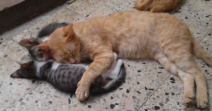 While Many Venezualans Are Tyring To Escape The Crisis, This Family Sanctuary Is Giving Abandoned Cats A Loving Home