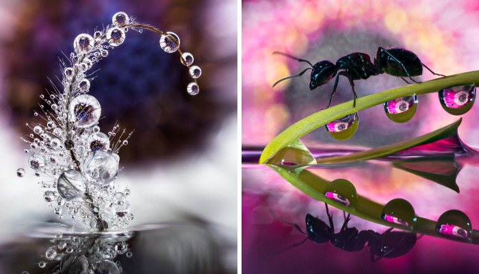 Shooting Water Droplet Refractions For Magical Macro Images