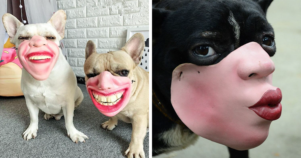 Amazon Is Selling Dog Muzzles That Look Like Human Faces And They're Too Bizarre