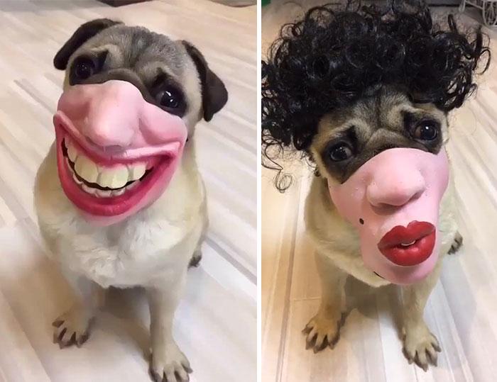 Weird Faces Of Animals 2