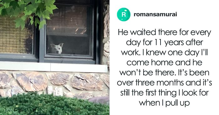 Dog Waited For His Owner To Come Back From Work By The Window Every Day For 11 Years, After His Death, Owner Shares The Tearjerking Pics