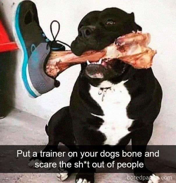 dogbone-5d0b5130d908c.jpg