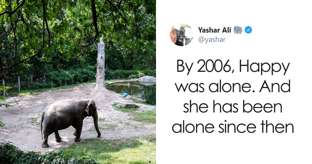Happy The Elephant Has Been Living Alone Since The Death Of Her Companion 13 Years Ago, And She Couldn't Be Sa