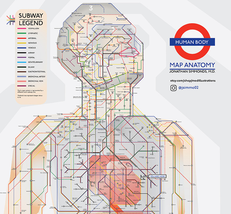 Doctor Reimagines The Human Body As A Subway Map
