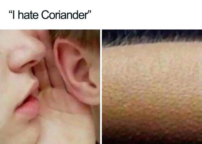 I Hate Coriander