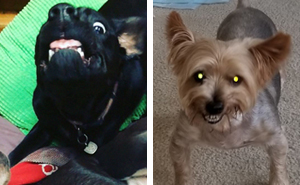 Hey Pandas, Share The Most Unflattering Pics Of Your Pets!