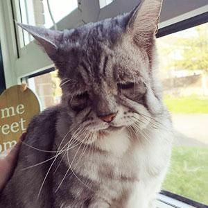 Este gato con el síndrome de Ehlers-Danlos al fin ha encontrado un hogar, y sus humanos se aseguran de que tenga una vida feliz
