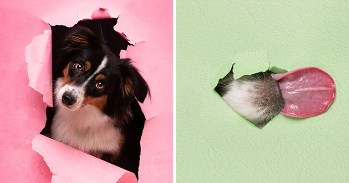 I Took Pictures Of Dogs Posing Through Torn Paper In My Studio (10 Pics)