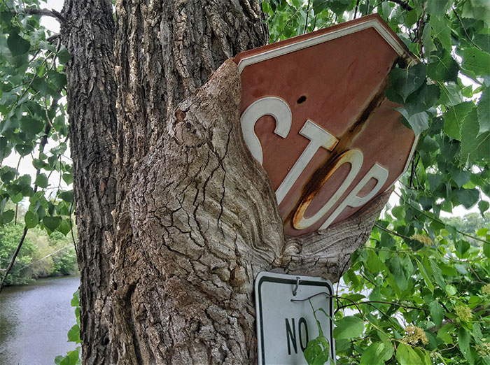 I Saw A Tree Eating A Stop Sign