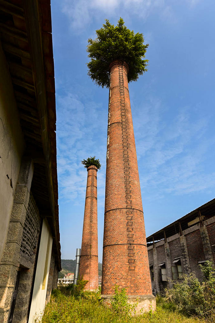 Trees Sprouted On Top Of Abandoned Chimneys