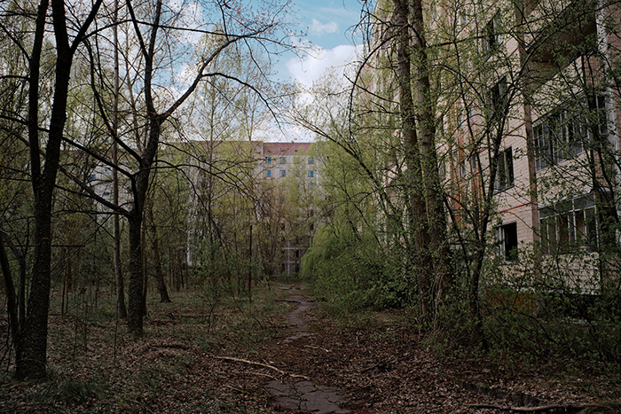 Pripyat Is No Longer The Ghost Town What It Was. Now It Is Consumed By The Forest And Plants. Nature Persistently Takes It Back