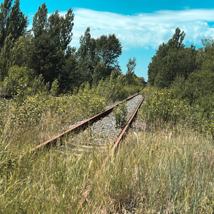Overgrown Rails. Nature Takes Everything Back