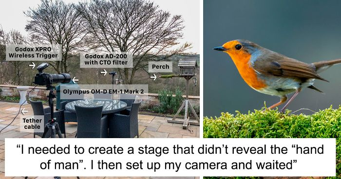 After Getting Criticized For Bird Photos I Started Setting Up Photo Stages For Them (16 Pics)