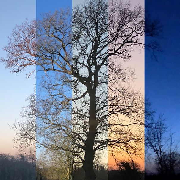 tree-5d18665eb45ec.jpg