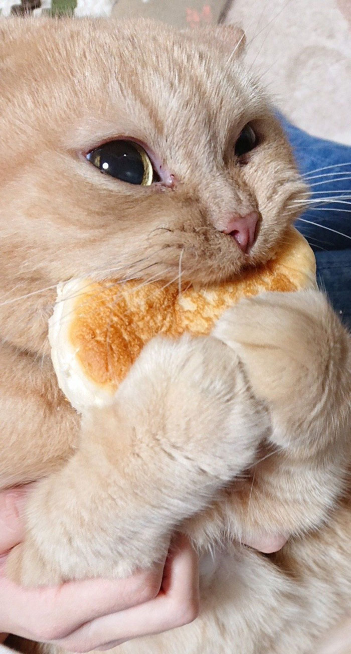 Tumblr User Explain Why Cats Are Obsessed With Eating Bread ...