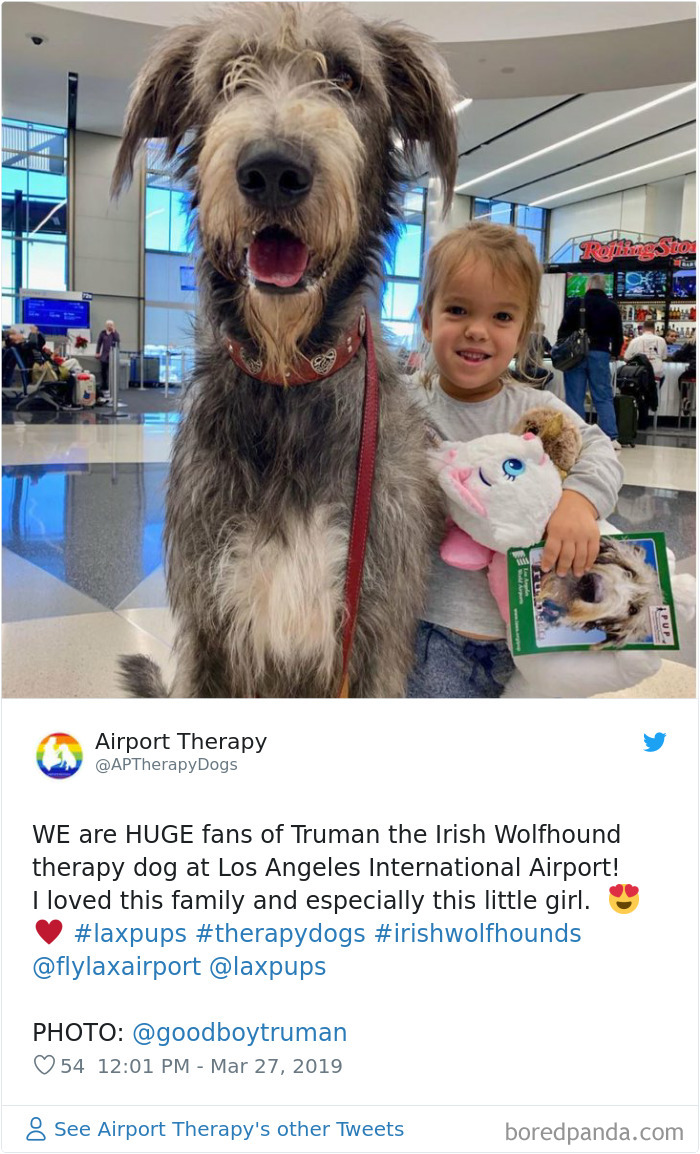 Truman The Irish Wolfhound Therapy Dog