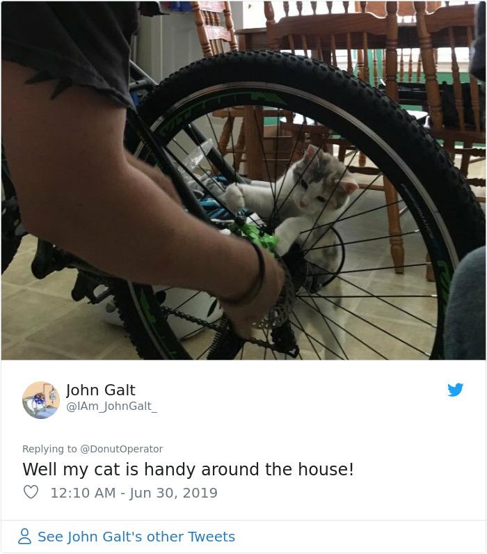 Sending-Cute-Cat-Pics-Trick