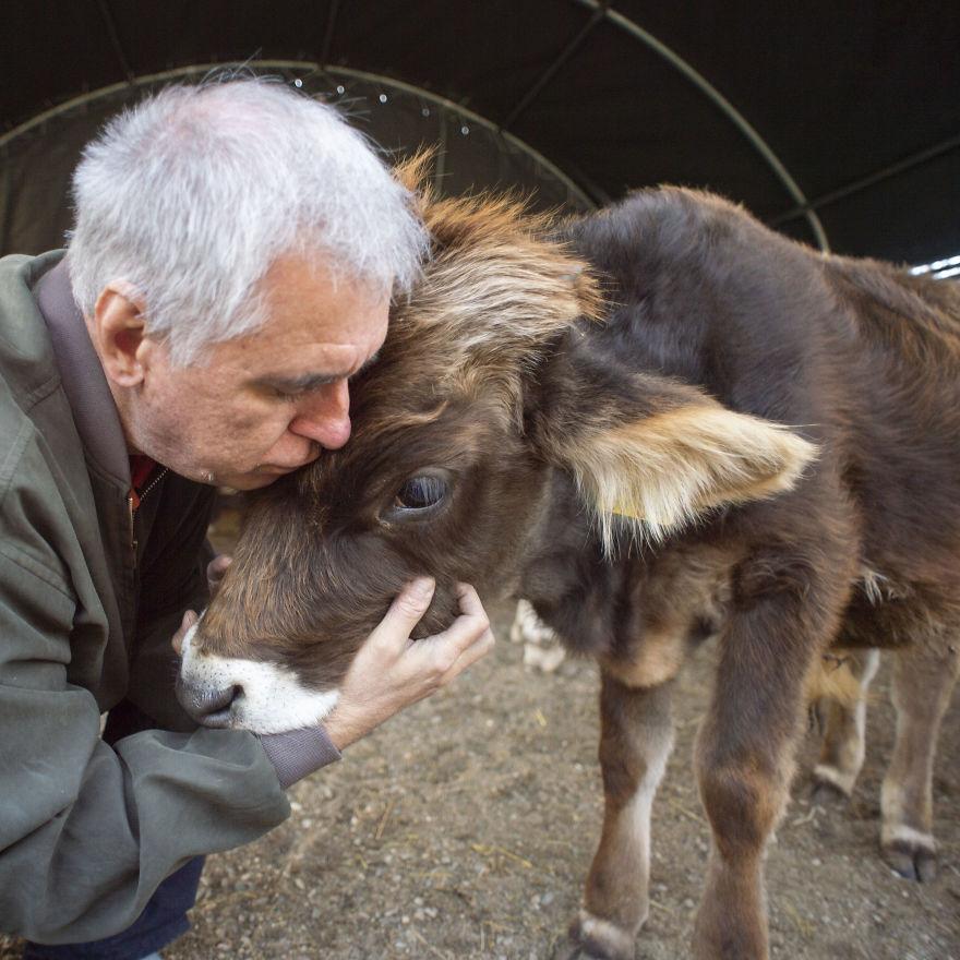 Cows Love Hugs From Grandpa