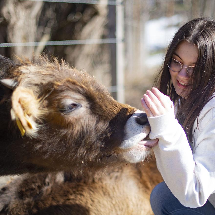 Cows Love Kissing Their Humans