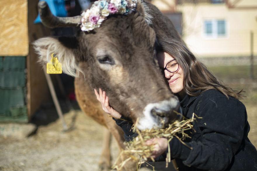 Cows Love Hugs