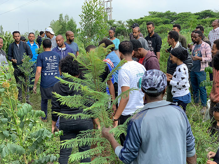 Ethiopia 'Breaks' World Record For Tree Planting By Planting 350 Million Trees In 12 Hours
