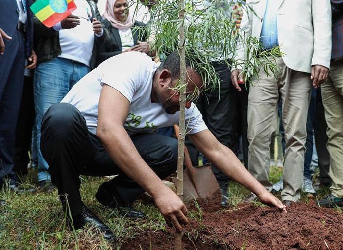 Etiopía bate el récord de plantar árboles al plantar en 12 horas 350 millones de árboles