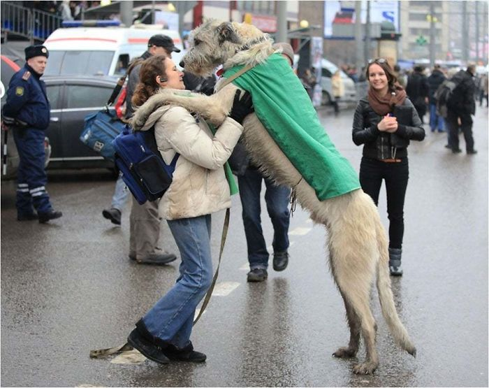 A Large Dog Or A Small Woman?